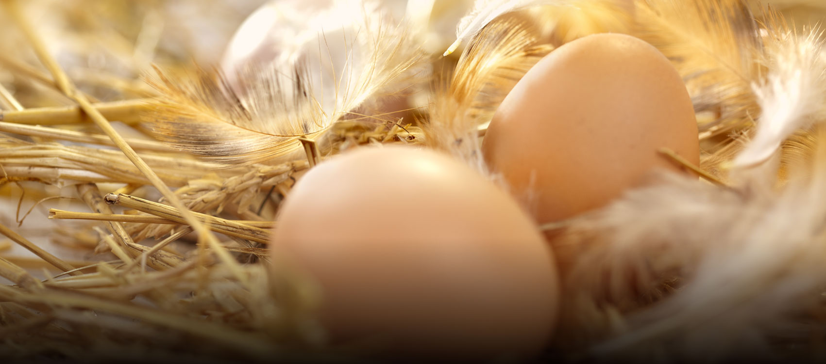 Riverview Eggs Archives Slider